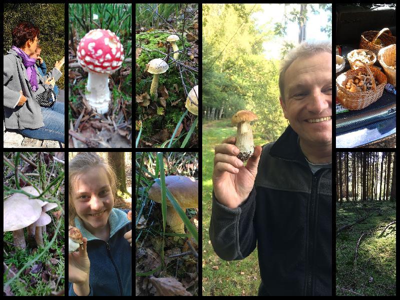 Impressionen aus dem Wunderland der Pilze - Saison 2016