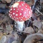 """Bilder von meinen """"Pilz-Ausflügen"""" - junger, kugeliger Fliegenpilz"""