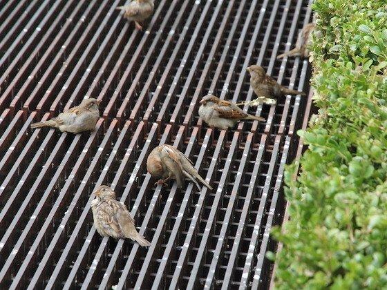Auch Tiere brauchen Wärme
