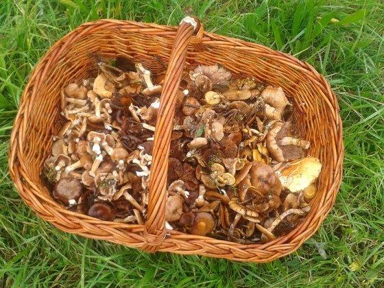 """Bilder von meinen """"Pilz-Ausflügen"""" - Mischpilz-Korb"""