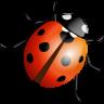 Glücksbringer »Ladybug«